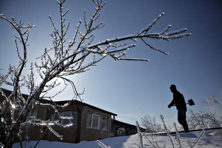 Afumati, Romania - February 9, 2012: A man is shoveling snow newt to a frozen tree branch. Romania was confronted with a cold wave with temperatures dropping to minus twenty degrees Celsius in February.
