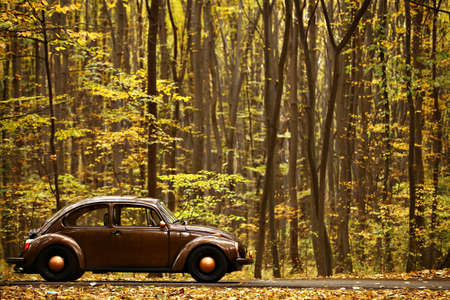 Color shot of a Volkswagen beetle in a forest