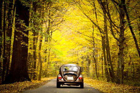 Bucharest, Romania - November 10, 2012: Color shot of a Volkswagen beetle in a forest. The Beetle model, is a car produced by the German auto maker Volkswagen starting with 1938.