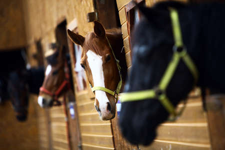 Color shot of some horses in a stable Imagens