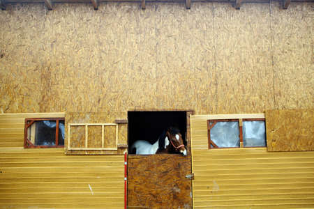 hobby hut: Color shot of a horse in a stable Stock Photo