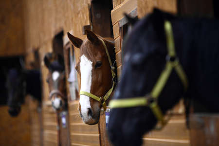 Color shot of some horses in a stable photo