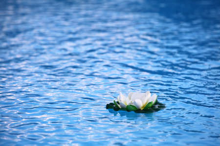 An artificial water lily floating on blue water  photo
