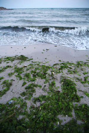 Color shot of some algae washed ashore by the sea waves photo