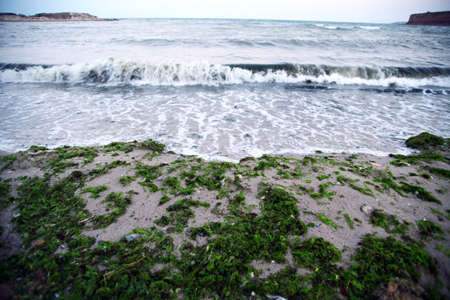 algae washed ashore by the sea waves photo