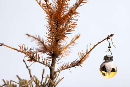 ecological problem: Color shot of a small dead Christmas tree. Stock Photo