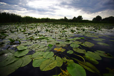 Color shot of water lilies floating on a lake. photo