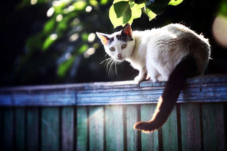 Color picture of a cat on a wooden fence. photo