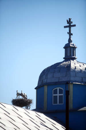 church group: Color picture of a group of stork in a nest, near a church tower. Stock Photo