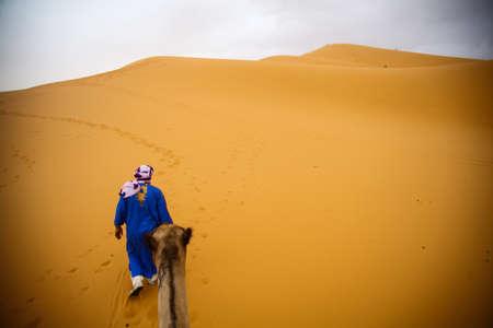 merzouga: Merzouga, Morocco - August 22, 2015: Color image of a camle in the Sahara desert, near Merzouga, Morocco. Editorial