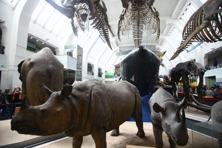 fish exhibition: London, UK - July 20, 2015: Stuffed animals and skeletons are displayed at the Natural History Museum in London, UK. Editorial