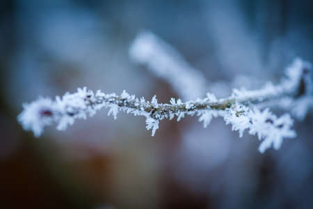 Close up image of a frozen tree branch. Stock Photo