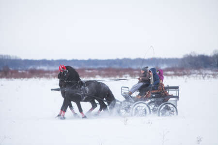 snowy field: Pietrosani, Romania - January 6, 2017: People ride a horse drawn cart on a snowy field, before a traditional Epiphany horse race in Pietrosani, Romania.