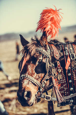 Color image of a horse with decorated reins. Stock Photo