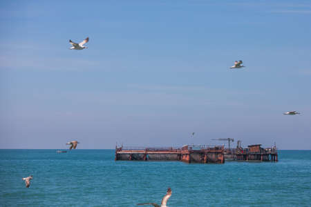 Seagulls flying by a mussel farm in the Black Sea.