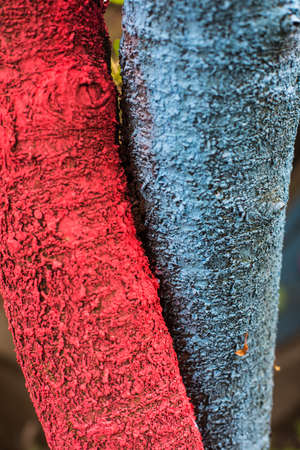 Color image of two tree trunks painted in red and blue.