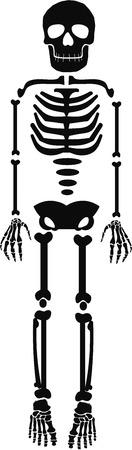 Menselijk skelet template Vector