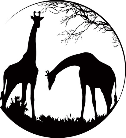 Giraffes in the wildness Illustration