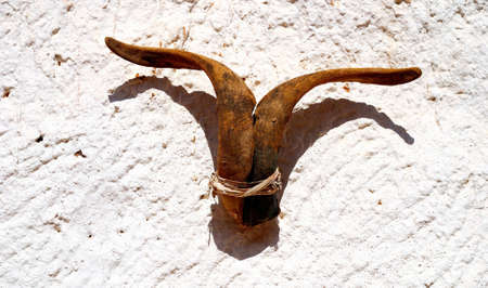 goat horns: Wild goat horns hanging on the wall as decoration