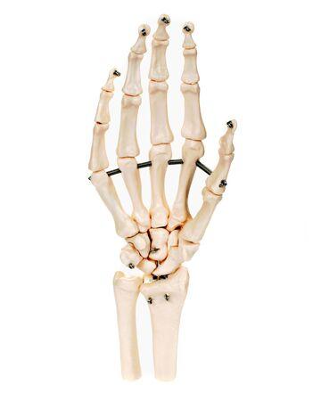 Hand skeleton, white background Stock Photo