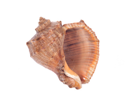 Decorative sea shell separated on white background