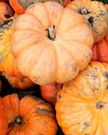 Halloween orange pumpkins in store just ready for sale