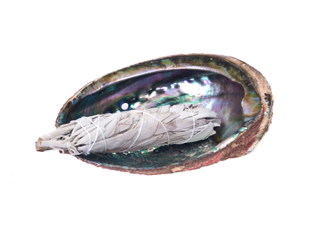 smudge: Sage smudge stick in bright polished rainbow abalone shell isolated on white background