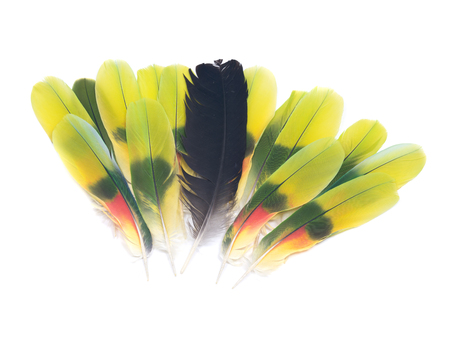 black raven: Black raven feather and colorful parrot feathers isolated on white background Stock Photo