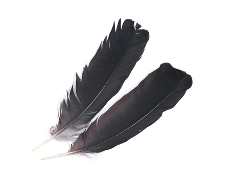 black raven: Black raven feather isolated on white background