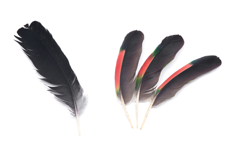 Black raven feather and colorful parrot feathers isolated on white background 免版税图像