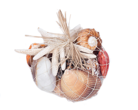 volute: Decorative bag of various seashells from Red Sea isolated on white background