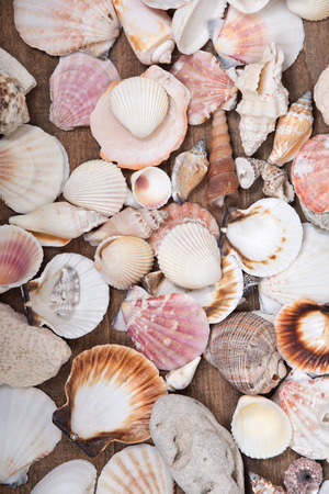 Variety of different sea shells presented on wooden vintage tray background