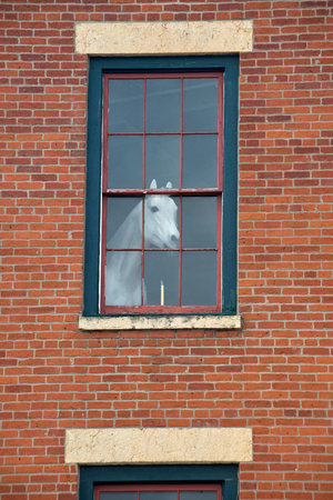 White horse mannequin in the window of the old red brick building Stock Photo - 86791893