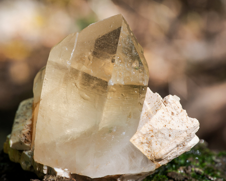 Cathedral citrine quartz point from Brazil nestled in matrix on moss, bryophyta and bark, rhytidome in forest preserve.