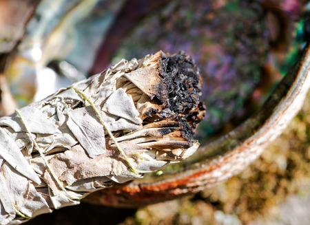 Smudging ritual using burning thick leafy bundle of white sage in bright polished rainbow abalone shell in forest preserve. Stockfoto