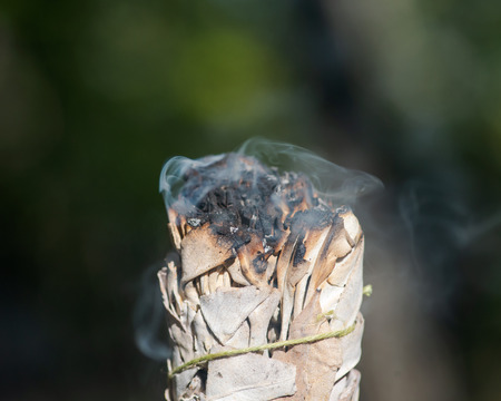 Smudging ritual using burning thick leafy bundle of white sage in forest preserve. Фото со стока