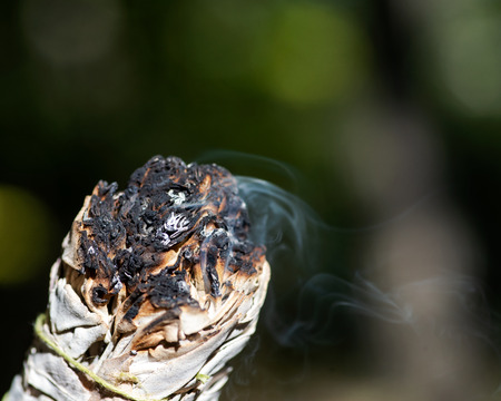 Smudging ritual using burning thick leafy bundle of white sage in forest preserve. Stockfoto