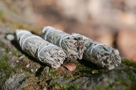 Wildcrafted dried white sage (Salvia apiana)leafy bundles on fibrous tree bark  in forest preserve. Smudging ceremony. Imagens