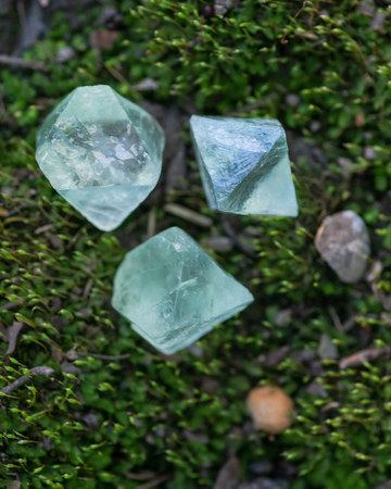 Green Fluorite Natural Octahedron Crystals on the green moss in the forest preserve. Stock Photo