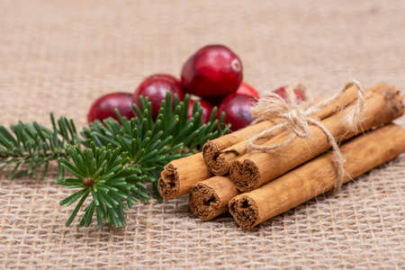 Winter holiday decoration: fraser fir twig, cinnamon sticks and cranberries on burlap background