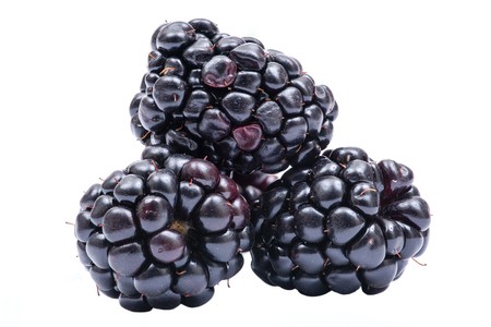 Macro shot of fresh ripe organic blackberry isolated on white background.