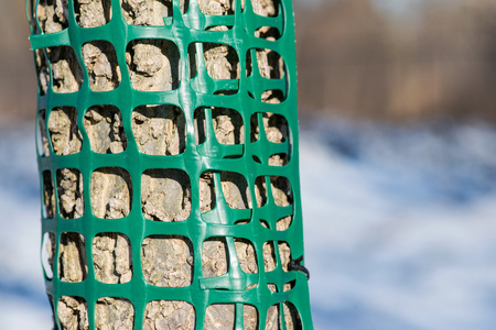 Plastic mesh protecting trees from animal destruction. Stock Photo