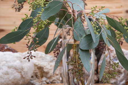 Fresh Eucalyptus stems in clear glass vase on wooden background.