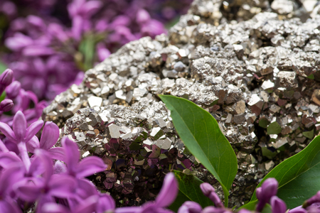 Natural Pyrite Cluster Specimen from Peru surrounded by purple lilac flowers. 스톡 콘텐츠