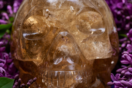 Natural Citrine  Quartz skull surrounded by purple lilac flowers.