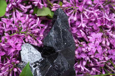 Morion Smokey Quartz with Chlorite surrounded by purple lilac flowers.