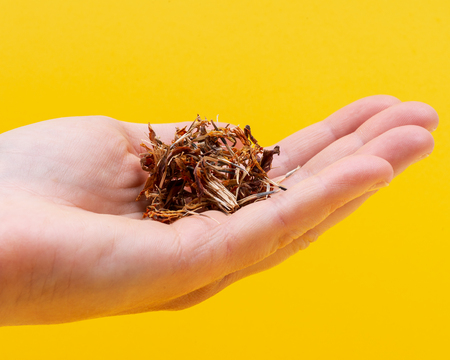 Marigold Dry Seeds (Mexican marigold, Aztec marigold, African marigold) in woman's hand. Tagetes erecta. Daisy family. Standard-Bild - 123497845