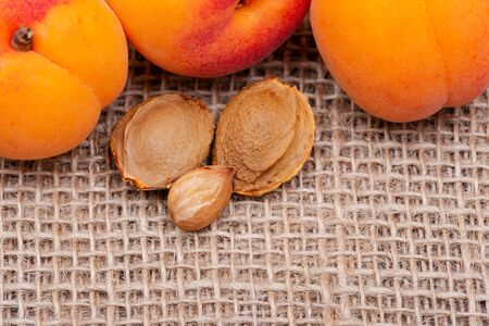 Fresh Organic Apricots and Apricot Kernels (the seed of an apricot, often called a
