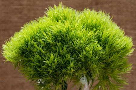Green Ball - Dianthus Barbatus - Sweet William. Unique Ball-shaped, lime green flowers in clear glass vase isolated on natural burlap background. Foto de archivo
