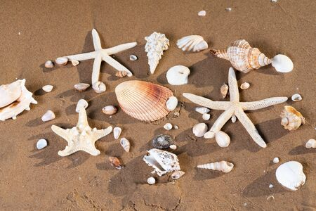 Sea Stars and Sea Shells on wet sand on the beach at sunrise. Banque d'images - 128873528